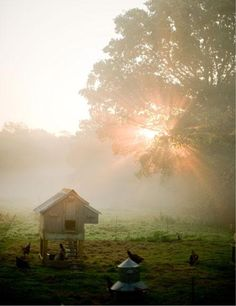 Sunrise over the hen house at Walnuts Farm.