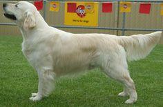 59 Best Diy Dog Grooming Images Diy Dog Dog Grooming Dog