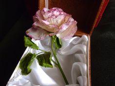 Роза из хф