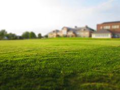 summer-grass.jpg (4000×3000)