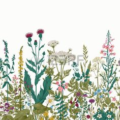 Wild Flower Stock Vector Illustration And Royalty Free Wild Flower Clipart