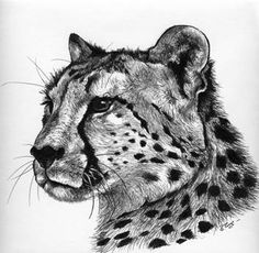 Drawn Cheetah easy to draw with pen or pencil