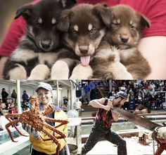 Puppies in the Piazza, deadliest catch, & logger heads