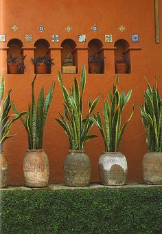 Clay pots ~ABOUT TO DO THIS IN LIEU OF THE FLOWER BED ALONG THE FRONT OF OUR HOUSE. WE'RE GETTING XERISCAPED!!!