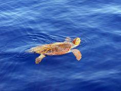 La fauna del Caribe mexicano - ExpertoAnimal