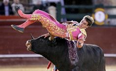 Raging bull: Spanish apprentice bullfighter Vicente Soler is gored by a bull during a bullfight on the occasion of Las Fallas Bullfighting Festival in Valencia, Spain.