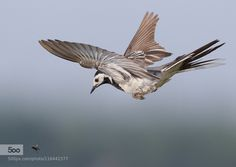 Target in sight !! by altenae. Please Like http://fb.me/go4photos and Follow @go4fotos Thank You. :-)