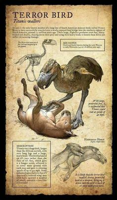 Dodo:Design and Illustration for extinct, prehistoric animal specimens and fossils, natural history museum signage. Prehistoric Creatures, Mythological Creatures, Fantasy Creatures, Mythical Creatures, Prehistoric World, Dinosaur Fossils, Dinosaur Art, Dinosaur Crafts, Vida Animal