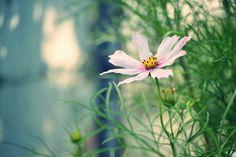 """Popatrz na ten projekt w @Behance: """"Nice Flowers"""" https://www.behance.net/gallery/56111253/Nice-Flowers"""