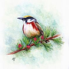 Bird painted by Ali Naseri size: Watercolour Painting, Ali, Bird, Birds, Ant