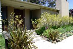 Anigozanthus flavidos yellow Kangaroo paws 'yellow', green Phormium tenax/New Zealand flax, blue fescue grass