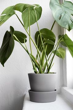 _ bathroom greenery inspo