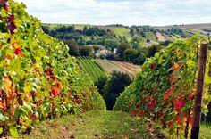 Winnica w Lipowcu/Lipowiec Vineyard