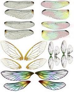 cicada wings - Yahoo Image Search Results