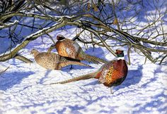 'Winter Pheasants' by Jason Lowes from the Countryside Alliance Christmas Card Collection 2012. To purchase cards from our 2016 Collection follow this link: http://www.countryside-alliance.org/shop-countryside/?swoof=1&product_cat=christmas-cards&page=1