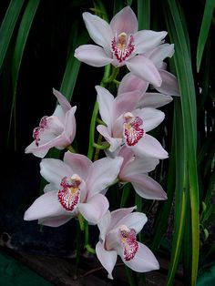 Delightful Little Orchids