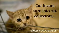 Cat lovers turn into cat collectors! @easyologypets