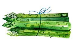 Margaret Berg Art : Illustration : food / veggies / kitchen
