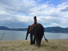 Большая опа)))вместе со мной на поиски переключений ❤️)#счастливыйслон#зверибелоноговой #опа #еслихочешьпоказатькому-топопу#толучшедве #иоднуочбольшуюикрасивую #джунгли #jangle #пхукет #тайланд #слон #купаниесослонами