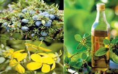 Litiaza biliară este o afecţiune larg răspândită, iar la originea bolii stau, de obicei, depunerile de colesterol şi de săruri în vezica biliară. Boabele de ienupăr, sucul de ridiche neagră şi uleiul de măsline sunt remedii care dizolvă pietrele.