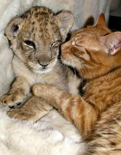 Cuddle.