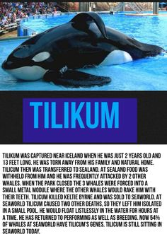 #Tilikum#Blackfish
