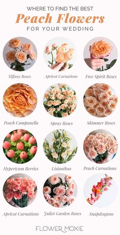 Peach Flowers, Fresh Flowers, Colorful Flowers, Beautiful Flowers, Diy Wedding Flowers, Floral Wedding, Flower Bouquet Diy, Wedding Flower Guide, Diy Flowers
