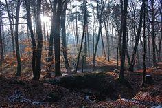 Furlbachschlucht Senne, südlich des Teutoburger Waldes Naturschutzgebiet Es war ein Tag mit wunderschönem Winterlicht.