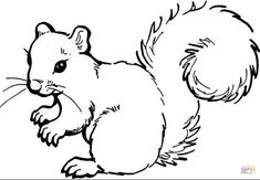 Today is National Squirrel appreciation day Animal Coloring Pages, Colouring Pages, Coloring Pages For Kids, Coloring Books, Coloring Sheets, Forest Animals, Woodland Animals, Nature Animals, Squirrel Coloring Page