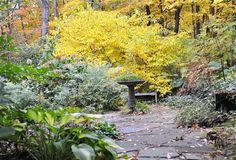 The natural woodland garden, with flair.