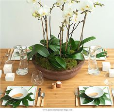 orchids, orchid arrangements