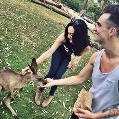 *gaaaaasssppp* BRENDON AND SARAH PETTING AND FEEDING A ROO... OH MY GOSH. CUTE OVERLOAD... I JUST CAN'T EVEN..