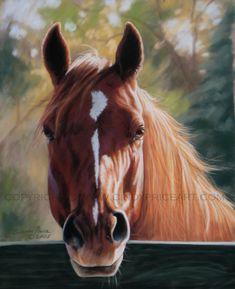 Autumn Light  Horse Print of original pastel by cindypriceart, $27.99