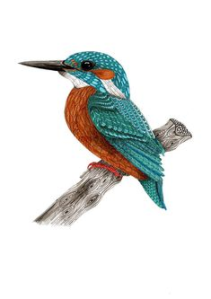 Kingfisher bird art print in turquoise and by TangledPeacock