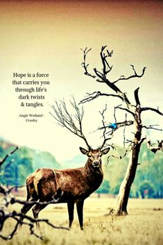 """inspirational quote with a deer and a bluebird.""""Hope is a force that carries you through life's dark twists & tangles. Free Soul Quotes, Broken Soul Quotes, Deer Quotes, Nature Quotes, Spring Quotes, Winter Quotes, Change And Growth Quotes, Candle In The Dark, Humanity Quotes"""