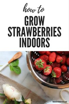 Why haven't I tried this yet!? Here's how to grow strawberries indoors. You can get growing strawberries indoors by growing strawberries from seed or by ordering bare root strawberries online #strawberries #organic #gardening #indoorgarden