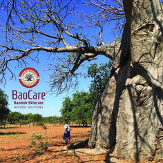 Do you know how long it takes the baobab tree to produce fruit? The answer will show you why baobab oil is so rare and precious. Baobab Oil, Baobab Tree, Natural Solutions, Natural Healing, Natural Skin Care, Culture, Fruit