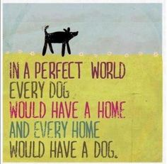 80% of Quality Cottages welcome dogs http://www.qualitycottages.co.uk/wales/pets-welcome-cottages-wales.php