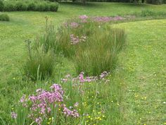 Koekoeksbloem drift Landscape Architecture, Landscape Design, Garden Design, Forest Garden, Rain Garden, Farm Gardens, Outdoor Gardens, Prairie Garden, Green Street