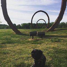 Happy VisitorGram Tuesday! It's been far too long since we featured an #NCMApark dog on here, so today we're posting this adorable snap by @debbiyarberclarke!