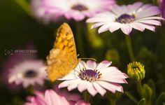 rinascite - la primavera esplode con tutto il suo splendore