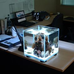 cube - A write up on how and why I set up my tank. Saltwater Fish Tanks, Saltwater Aquarium, Freshwater Aquarium, Marine Aquarium, Reef Aquarium, Planted Aquarium, Aquascaping, Nano Reef Tank, Reef Tanks
