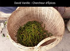 Récolte chez les producteurs de poivre Kâmpôt au Cambodge - David Vanille : Chercheur d'Épices Kampot, Vanille Bourbon, Plantation, Wicker Baskets, Serving Bowls, David, Stuffed Peppers, Pepper, Cambodia