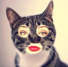 womancat! beware, manbat!