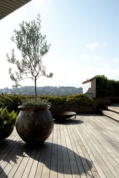 #outdoors #plants containers #Rooftop garden. Olive Trees in feature pots underplanted with Senecio sp. Robert Plumb Fire Pit. Woollahra, NSW Australia Anthony Wyer + Associates www.anthonywyer.com
