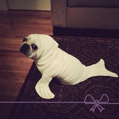 Nhó! Bebê cachorro fantasiado de bebê foca. Como é possível caber tanta fofura em uma foto só?