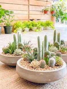 Mini Cactus Garden, Succulent Gardening, Succulent Terrarium, Cacti And Succulents, Planting Succulents, Cactus Plants, Succulent Centerpieces, Succulent Arrangements, Floral Arrangements