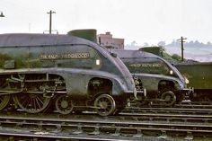 - Perth Shed LNER pacifics nos. 60006 and 60009 July 1965 - Perth Shed Diesel Locomotive, Steam Locomotive, Steam Trains Uk, Union Of South Africa, Abandoned Train, Steam Railway, Train Art, British Rail, Train Pictures