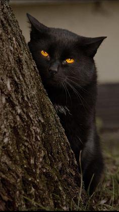 .Stalking you