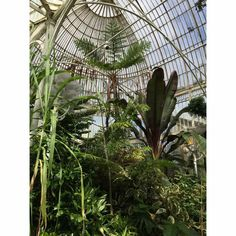 botanic belfaat